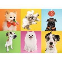 Пазл Trefl, 500 элементов - Собаки