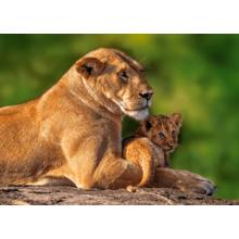 Пазл Castorland, 180 элементов - Львица со львёнком