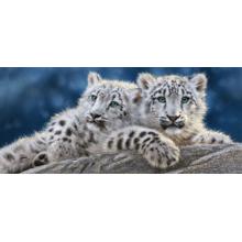 Пазл Castorland, 600 элементов - Снежные леопарды