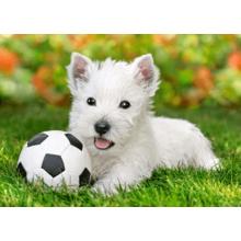 Пазл Castorland, 60 элементов - Белый щенок с мячём