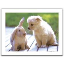 Пазл Pintoo, 300 элементов - Кролик и щенок