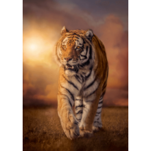 Пазл Clementoni, 1500 элементов - Тигр