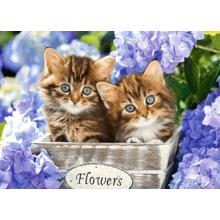 Пазл Castorland, 60 элементов - Милые котята