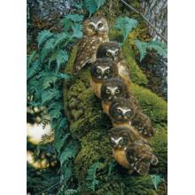 Пазл Cobble Hill, 1000 элементов - Совиное дерево