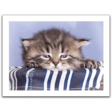 Пазл Pintoo, 300 элементов - Грустный котенок