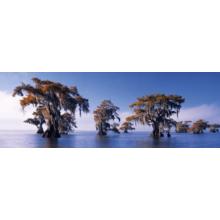 Пазл Heye, 1000 элементов - Затопленные кипарисы