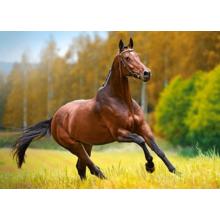 Пазл Castorland, 180 элементов - Лошадь в поле