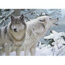 Пазл Cobble Hill, 500 элементов - Дыхание зимы (волки)