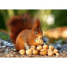 Пазл Castorland, 180 элементов - Белка с орешками
