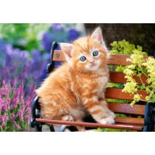 Пазл Castorland, 500 элементов - Котёнок