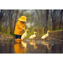 Пазл Castorland, 500 элементов - Друзья под дождем