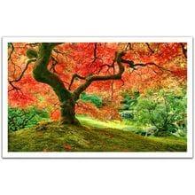 Пазл Pintoo, 1000 элементов - Японский сад в Портленде