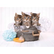 Пазл Clementoni, 500 элементов - Банный день (котята)