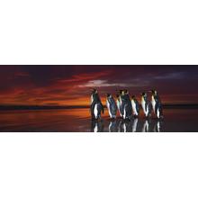 Пазл Heye,1000 элементов - Королевские пингвины