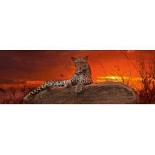 Пазл Heye, 2000 элементов - Леопард на рассвете