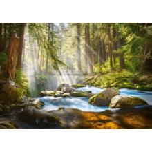 Пазл Castorland, 500 элементов - Свет в лесу