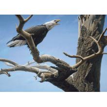Пазл Cobble Hill, 500 элементов - Разговаривая с ветром