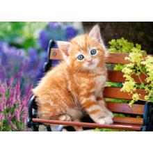Пазл Castorland, 180 элементов - Рыжий котёнок