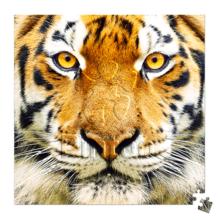 Пазл Pintoo, 256 элементов - Тигр