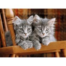 Пазл Clementoni, 500 элементов - Котята на стуле
