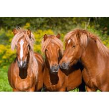 Пазл Castorland, 1000 элементов - Лошади