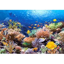 Пазл Castorland, 1000 элементов - Коралловый риф