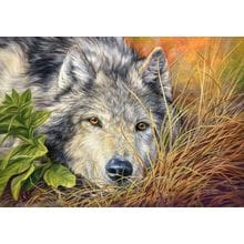 Пазл Castorland, 500 элементов - Волчья грусть