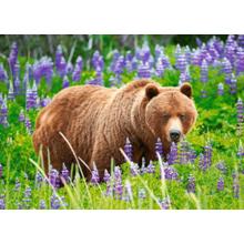 Пазл Castorland, 120 элементов - Медведь на лугу