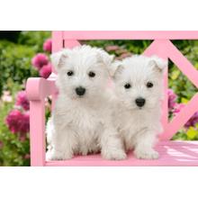 Пазл Castorland, 1500 элементов - Два белых щенка