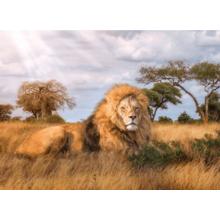Пазл Clementoni, 1000 элементов - Лев-царь зверей