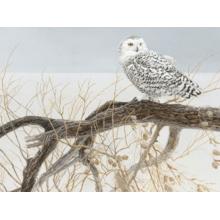 Пазл Cobble Hill, 500 элементов - Белая сова на иве