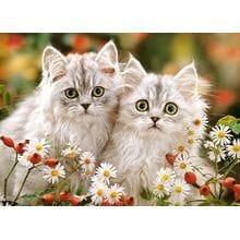 Пазл Castorland, 200 элементов - Персидские котята