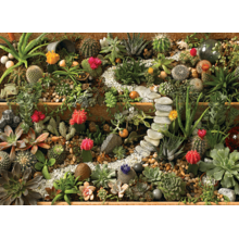 Пазл Cobble Hill, 1000 элементов - Сад из кактусов