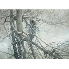 Пазл Cobble Hill, 1000 элементов - Северный призрак
