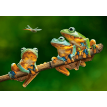 Пазл Castorland, 500 элементов - Лягушки