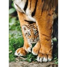 Пазл Clementoni, 500 элементов - Тигры - мамина защита