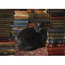Пазл Cobble Hill, 1000 элементов - Библиотечный любимец