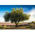 Пазл Schmidt, 1000 элементов - Оливковое дерево. Прованс