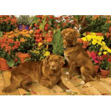 Пазл Cobble Hill, 1000 элементов - Собаки в оранжерее