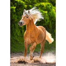 Пазл Castorland 500 элементов - Бегущая лошадь