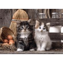 Пазл Clementoni, 1000 элементов - Деревенские котята