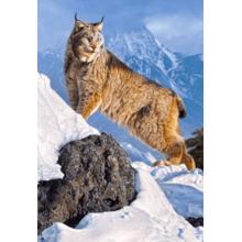 Пазл Castorland, 1000 элементов - Рысь в горах